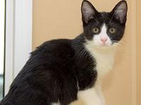Floyd's story Hi there! I'm a cute little kitty looking