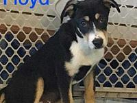 Floyd's story Floyd is a handsome funny boy ready to