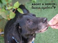 My story I'm available for adoption today (9/8) at