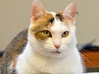 Fluff's story The Calico Gal Gang is here----just