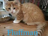 Fluffman's story This little fluffball is quite the