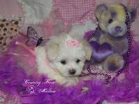 I have 3 caring and smart maltese puppies that we are