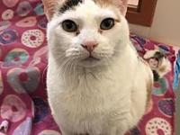Fluffy (Bonded with Cuddles)'s story Visit this