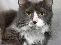Fluffy's story Fluffy is a sweet old man looking for a