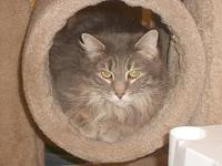 Fluffy G's story Fluffy is a 5 1/2 year old spayed