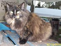 Fluffy (Torti)'s story I was picked up in Inglis