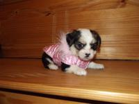 Dob Jan 30 she will be 8 weeks onMarch 27 she is