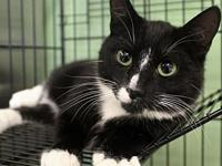 Flynn's story Flynn is one of three kittens from a