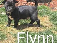 Flynn's story It's time for Sparkles and her 9 puppies