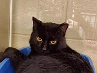 My story Meet Fonzie a 2 year old DSH from SC that came