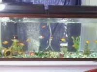 For sale 55 gallon fish tank and all included is fish