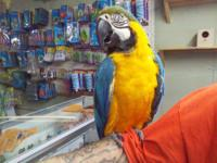 *******ONLY AVAILABLE AT TUCAN PETSHOP!************