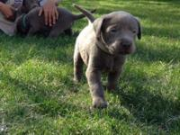 We have AKC Pups that were birthed 3/25. 5 guys offered