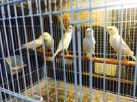 We have a large selection of canaries males an females