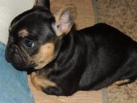 She is Black & Tan with no white markings. Both parents