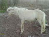 5 Minature Horses For Sale 200.00 each or best offer.