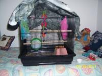 For sale a 1 year old Sugarglider, playful and loving.