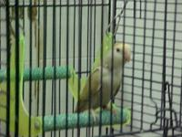 we have several birds we need to pair up or sale or