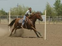 Pole/barrel horse for sale.  17yr old, sorrell, gelding