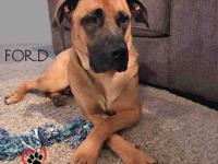 Ford, the 2 year old Shepherd/Mastiff mix, is move in