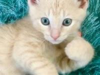 Forest's story Forest is a lively, playful kitten with