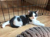 Forest's story FOREST is a male kitten who is 7 weeks
