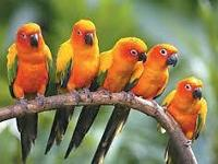 VISIT US AT THE SOUTHEAST EXOTIC BIRD FAIR ON JUNE 6TH