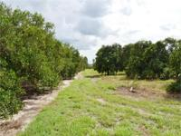 Producing grove with 58 +/- acres is located in a