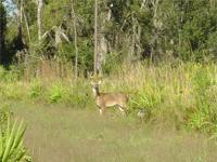 1,808+/- acres of beautiful Central Florida Ranch.