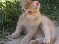 Fostered kittens 16-18 wks old, litter trained and