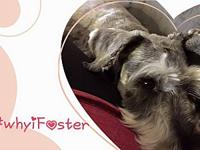 Fosters Needed's story Interested in fostering a