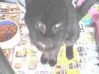 FOUND Black Kitten's story Young cat found in the