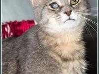 FOUNDER's story $97.50 FEE INCLUDES: neutering/spaying,