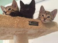 Four kittens (the CT's)'s story (Group name: The CT's)