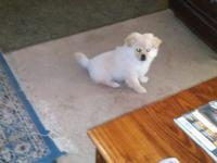 He's a playful fun 4 month old puppy who needs a good