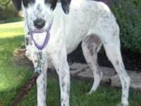 Foxhound - Amelia - Medium - Adult - Female - Dog My