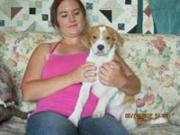 Foxhound - Bonnie - Medium - Baby - Female - Dog Bonnie