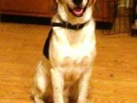 "Foxhound - Mary Grace ""gracie"" - Large - Adult - Female"