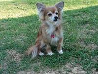 Foxy's story Please contact Pet
