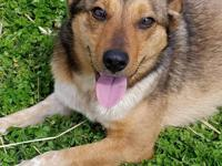 FOXY was surrendered along with two older dogs. She is