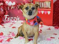 Fozzie's story Fozzie was neutered @ HSOY clinic on