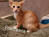 My story Hi! I'm Francesca, and I'm a new addition to