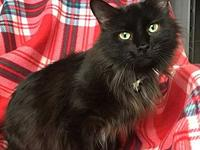 Francie's story Very sweet girl looking for a home at