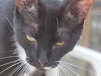 Francis's story Francis is a handsome tuxedo boy with a