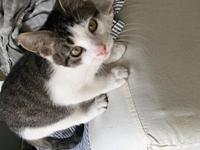 Francis's story Francis is a male domestic shorthair