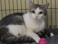 Meet Francyne!  Francyne is a domestic short hair who