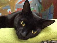 Frank's story Frank is a male short-haired black cat,