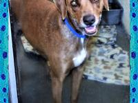 135764 / R220734Frank is an adorable, very lovable boy.