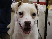 Frankie's story Need a fun loving little guy to