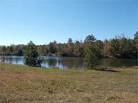 135 beautiful acres, 2 lakes one 7 acres one 3 acres. A